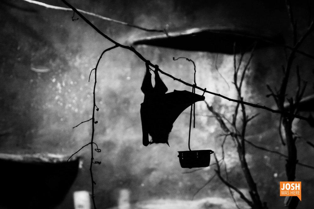 Bat in Busch Gardens