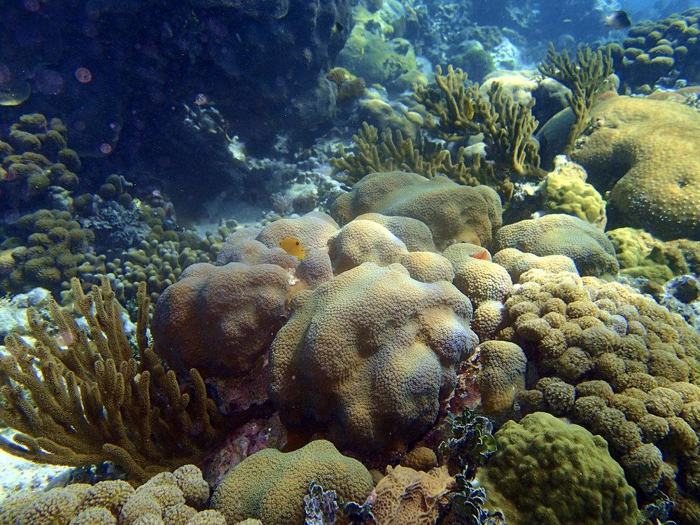 Underwater-034 1.jpg