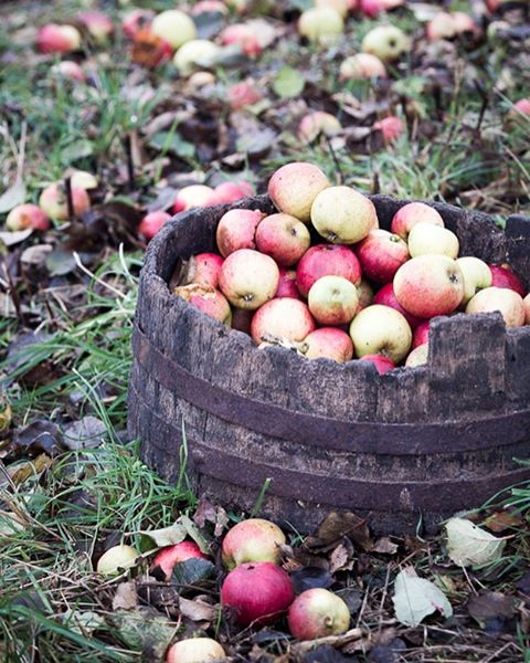 #apples #orchard #dartmoor