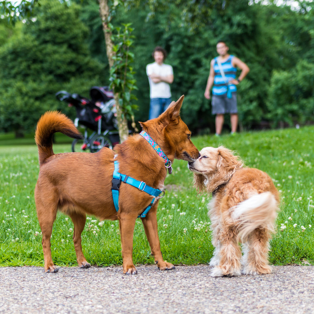 dog park photography sigma canon sniffing cute