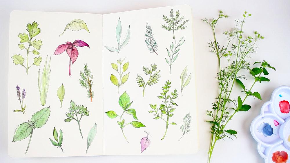 watercolor_herbs_sketchbook_challenge