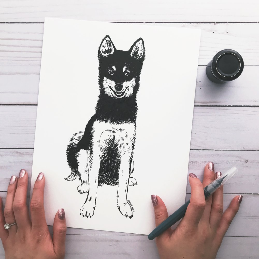 alaskan kleekai puppy drawing sarica