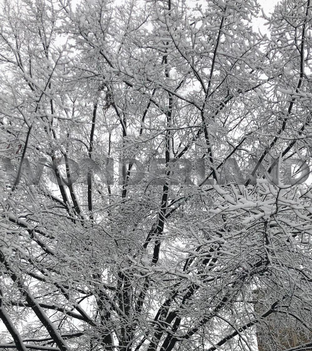 Winter- Kala Juett.png