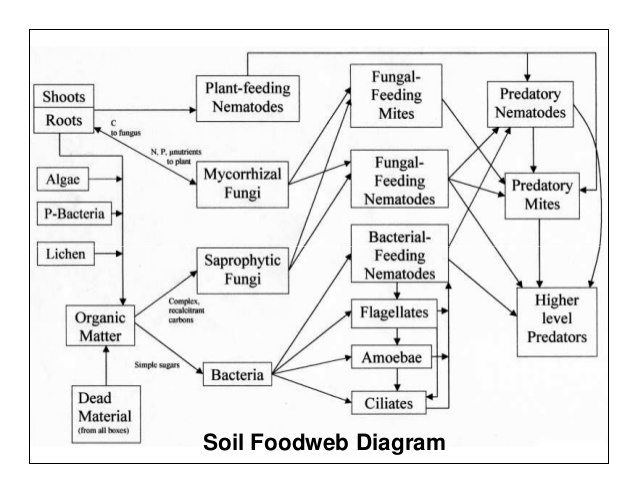 soil foodweb diagram.jpg