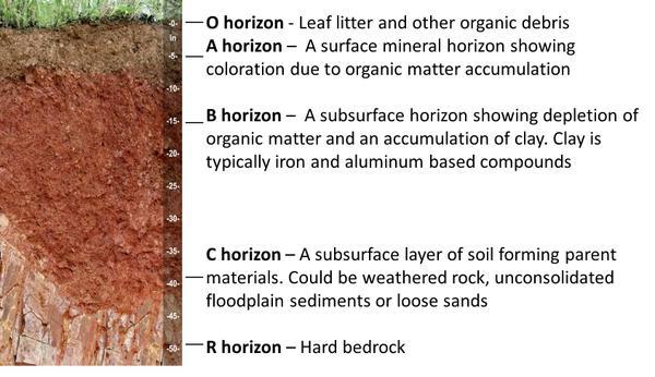 soil horizon.jpg