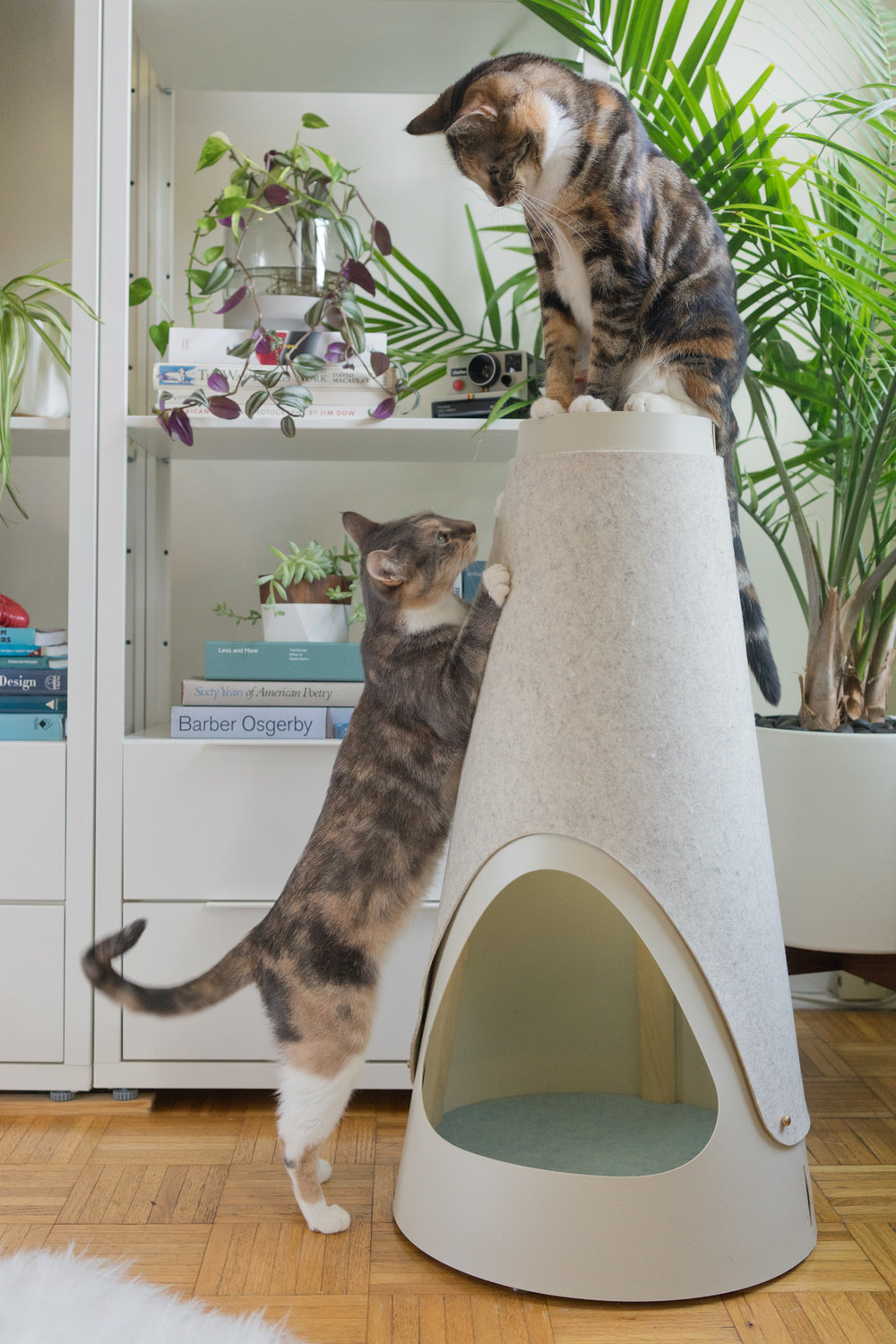 TALL & STURDY  - In nature, cats scratch trees because they're tall, and don't tip or wobble. At home, the next best thing is your favorite armchair. We made The Cone to give cats a better option. At 30 inches tall, cats can fully stretch out when they scratch. With a weighted base, it's super stable.