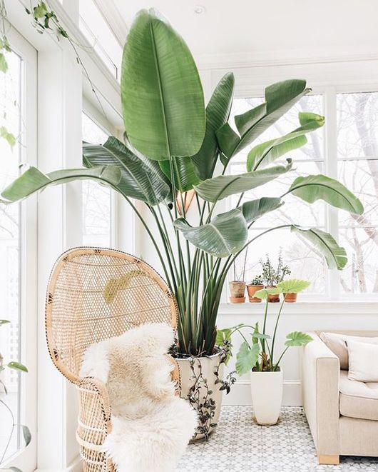 Indoor Plants — Create Madly