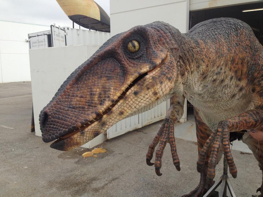 Raptor.jpeg