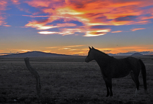 horse-set.jpg