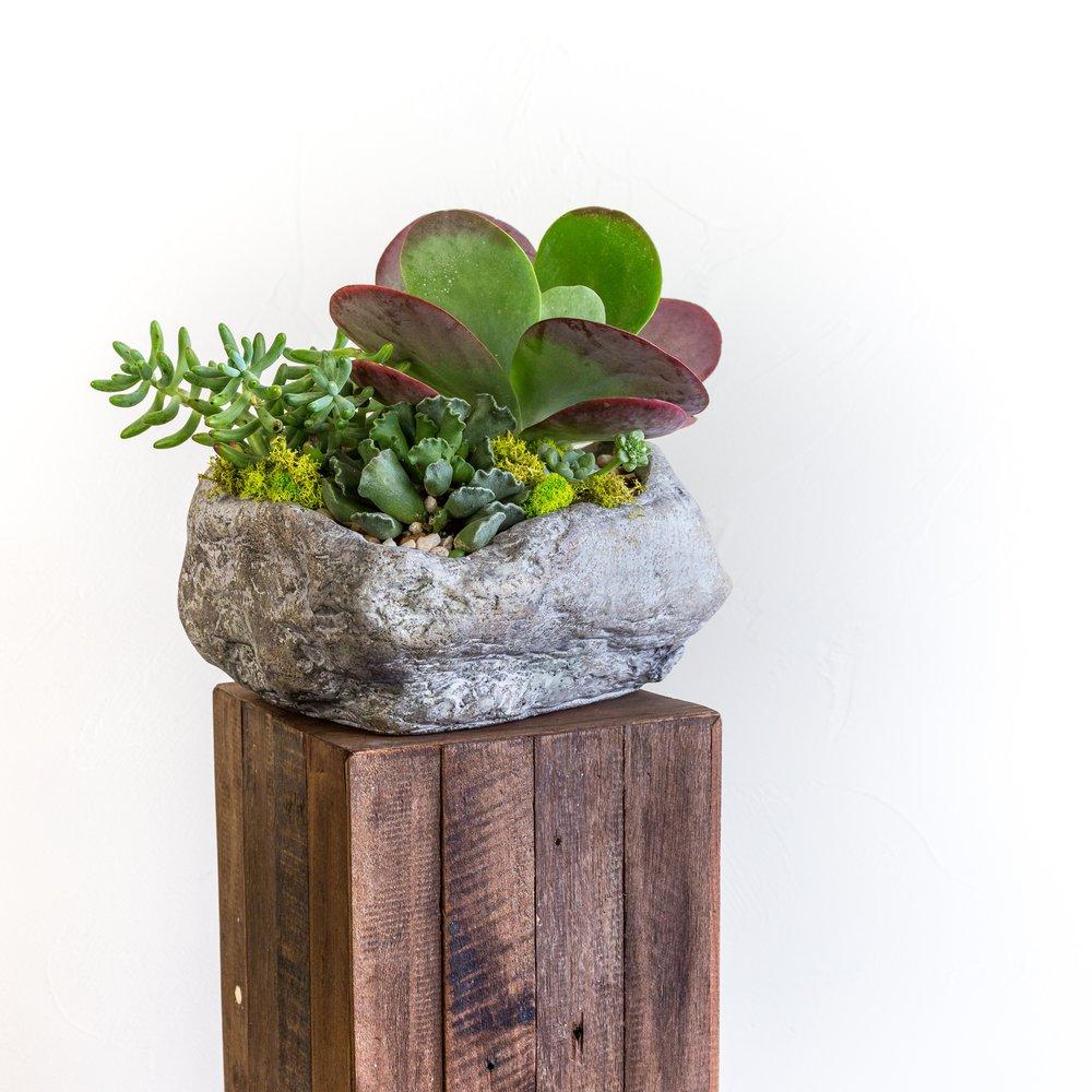 Plant - Succulent planter.jpg