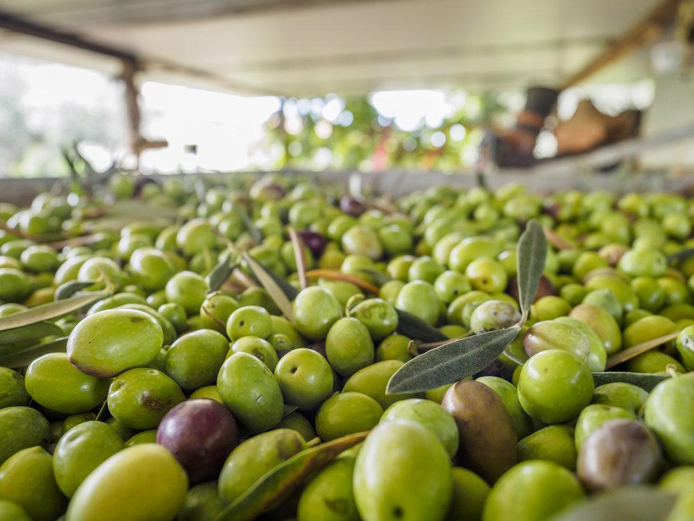 Olive Oil Lab Test Results - Olive Oil Certifiers OOCERT 1.jpg