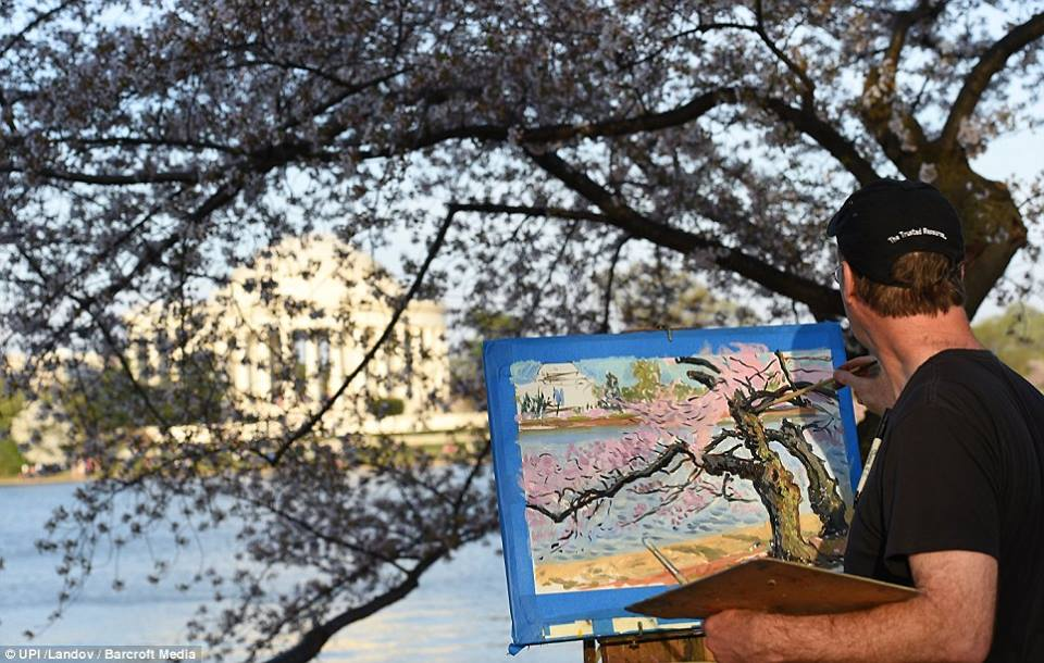 Painting cherry blossom trees at the Tidal basin in Washington, D.C., spring of 2014.