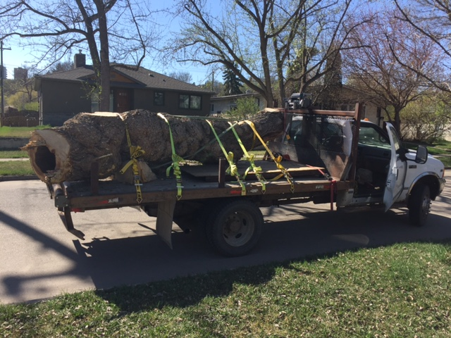 Log Salvage - Burly Maple.JPG