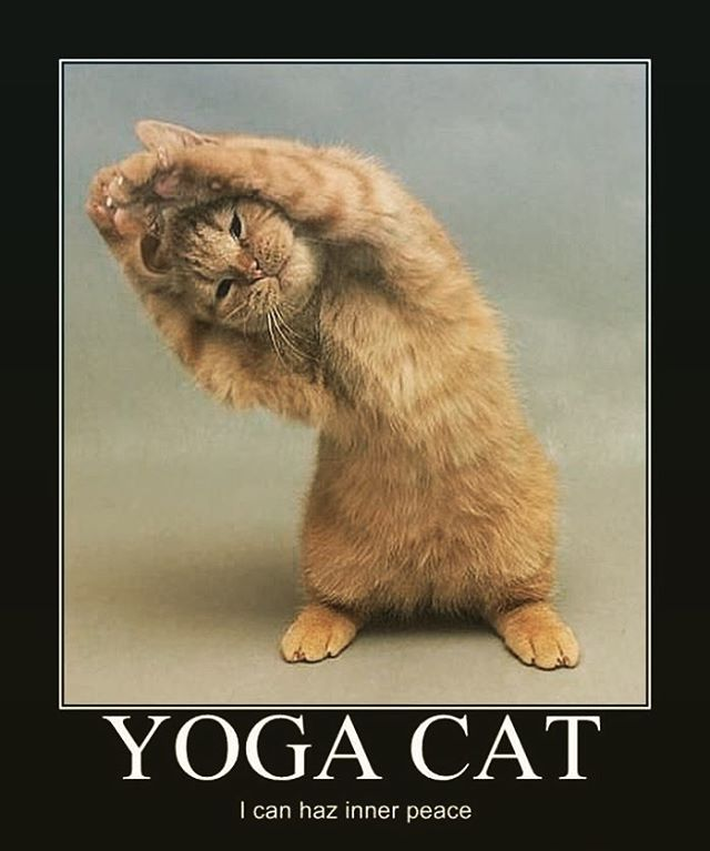 Just like Yoga Cat you can find inner peace too. Join us for some relaxing yoga at our Sweet Surrender Class to help prepare you for the week ahead. Sunday's 7-8:15pm