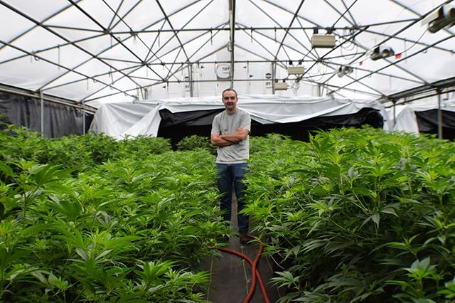 Our greenhouse partner, Hardy Boy Farms, has devoted up to 300,000 square feet of its facility to grow hemp for our genetics research. Here's ebbu's Director of Genetic Research, Rob Roscow, soaking it all in. If you haven't already, please up-vote our 2019 #SXSW panel proposal on cannabis genetic research! Link in bio. . . #cannabis #genetics #science #research #hemp #hempisthefuture #geneediting #poweredbyebbu #greenhouse