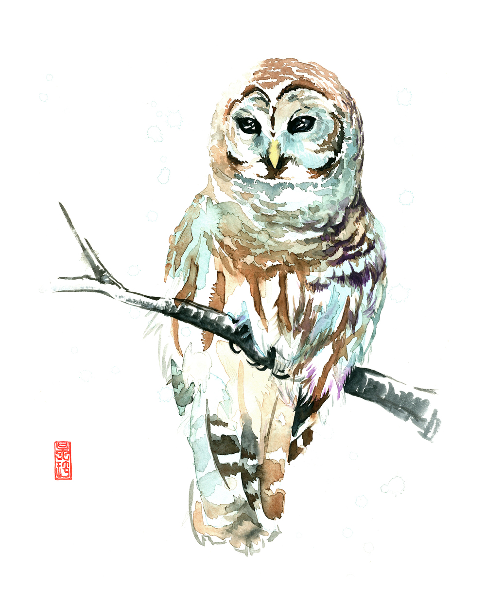 Barred Owl 8x10.jpg