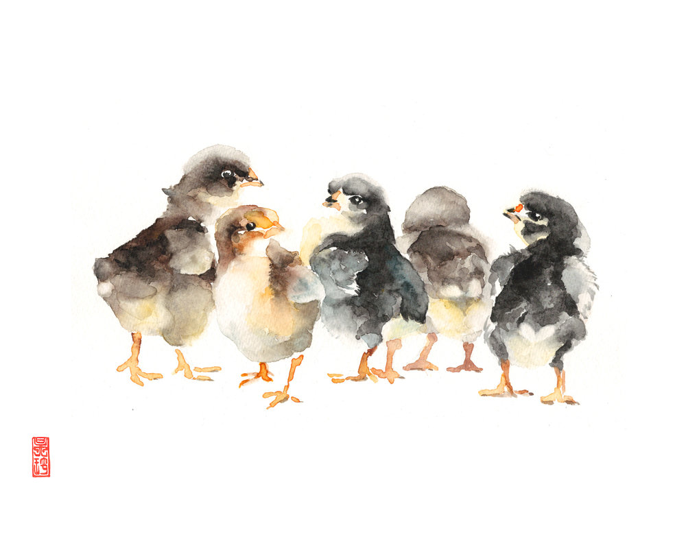 Baby Chicks Group Photo