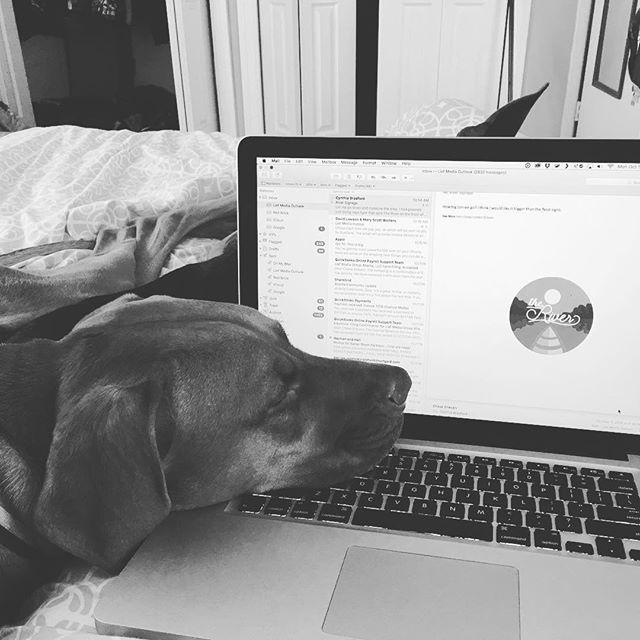 Cat Dog... #remithecoonhound