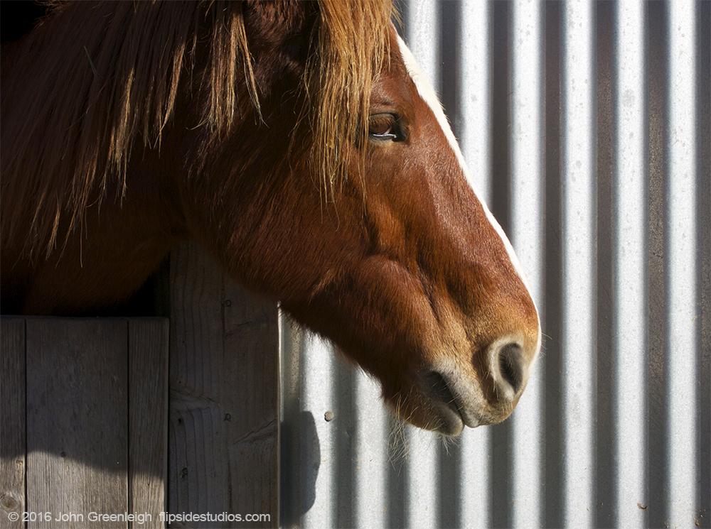horse_tin.jpg