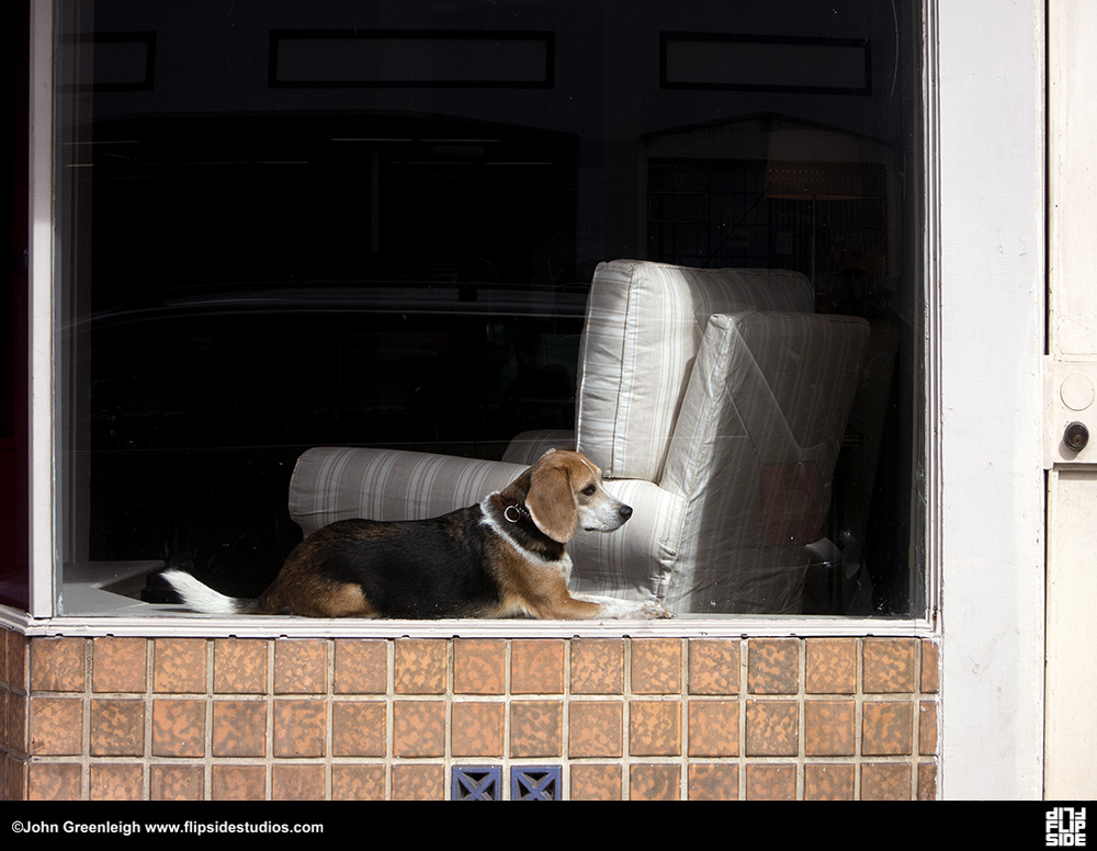 doggie_window_cc.jpg