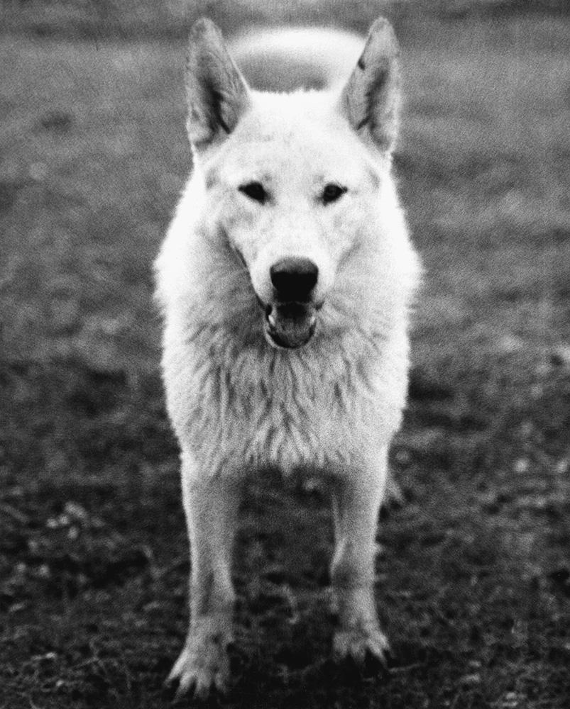 Neil Young's Dog, Broken Arrow Ranch 1972