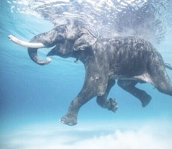 See, anyone can Float.   (image via my down under Swedish Yogi friend  @fakander )
