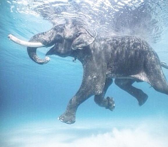 See, anyone can Float.  (image via my down under Swedish Yogi friend  @fakander )