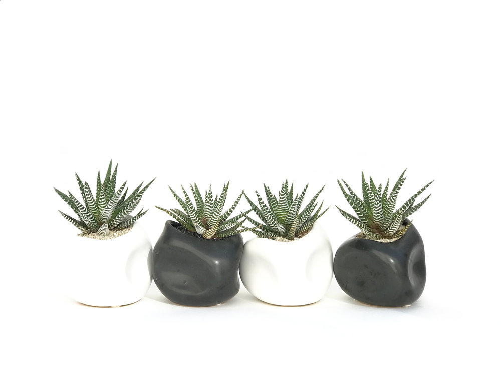 haworthiainsculptedvessels.jpg