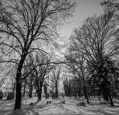 "@aleksandarmiskov""Dark Forest"""