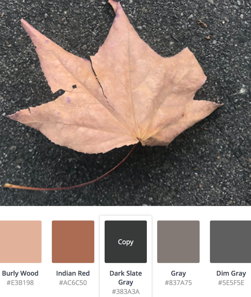 Colors-of-leaves.png