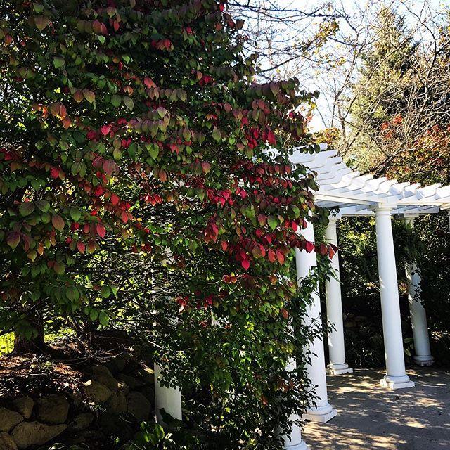 It's fall in the garden!  #burningbushes #fallweddings #aberdeengarden