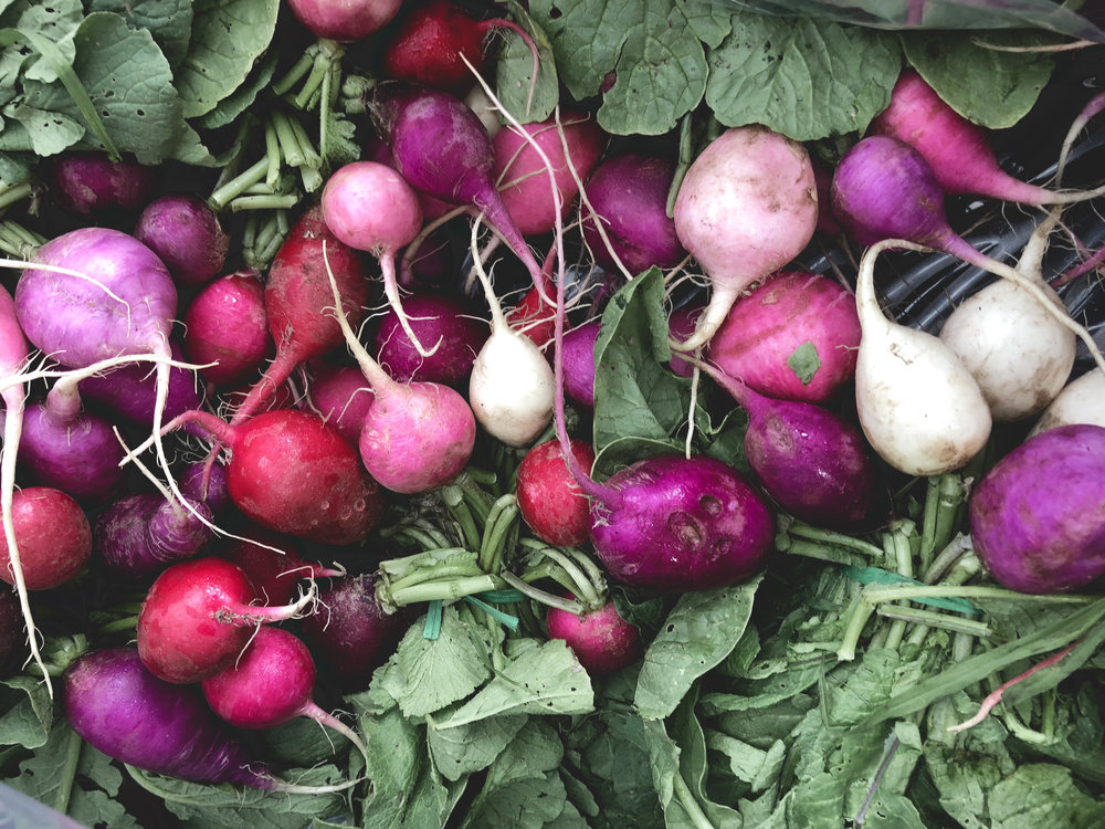 Radishes-Farmers-Market-Chicago.jpg