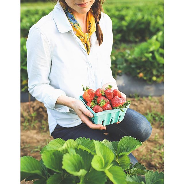 Strawberry season is in full swing here in Nashville and we've got just a few blissful weeks left to pick and devour on repeat until they disappear for yet another year! Check back for some more tasty strawberry recipes to come and visit the blog for my favorite strawberry arugula pizza recipe 😋 And in the meantime, get pickin! @greendoorgourmet has Pickin Parties every Wednesday in May! 🍓🤗