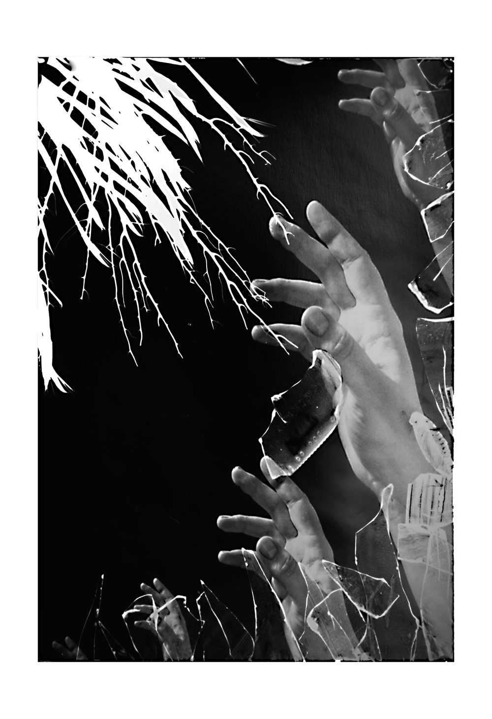 Photogram Digital Negative Composite