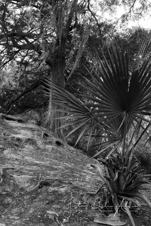 2017_avery_island_&_tabasco-6.jpg