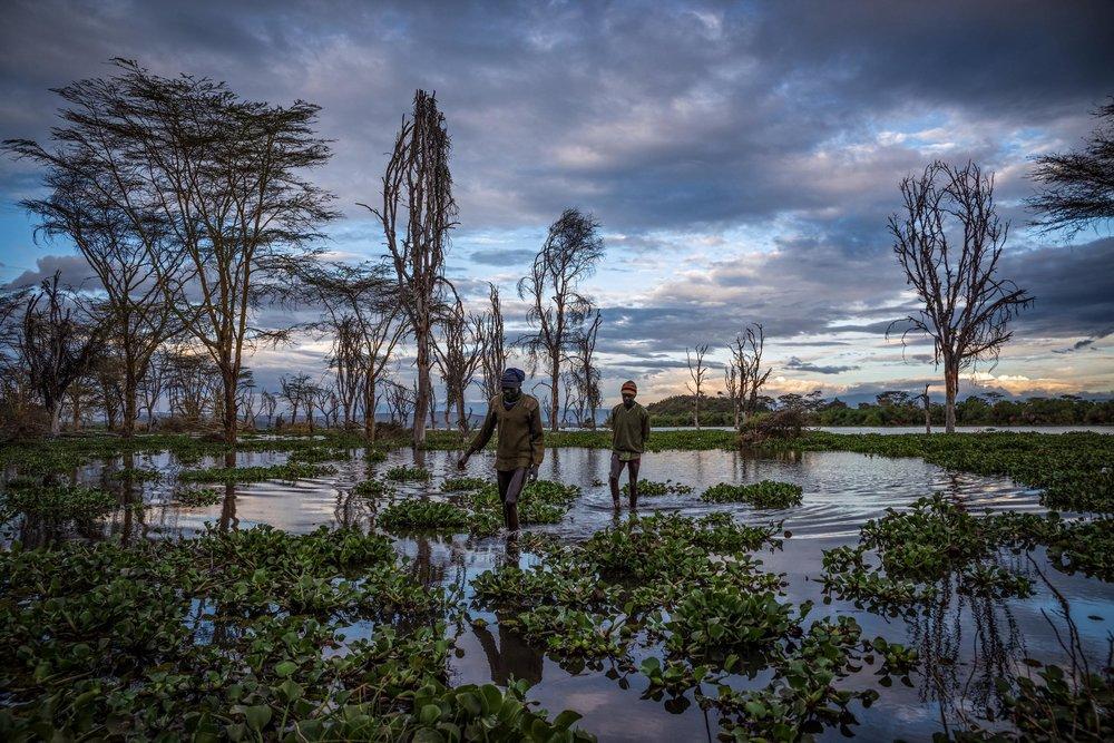 Fishermen bring in their evening catch from Lake Naivasha, Nakuru County, Kenya. October 2019.