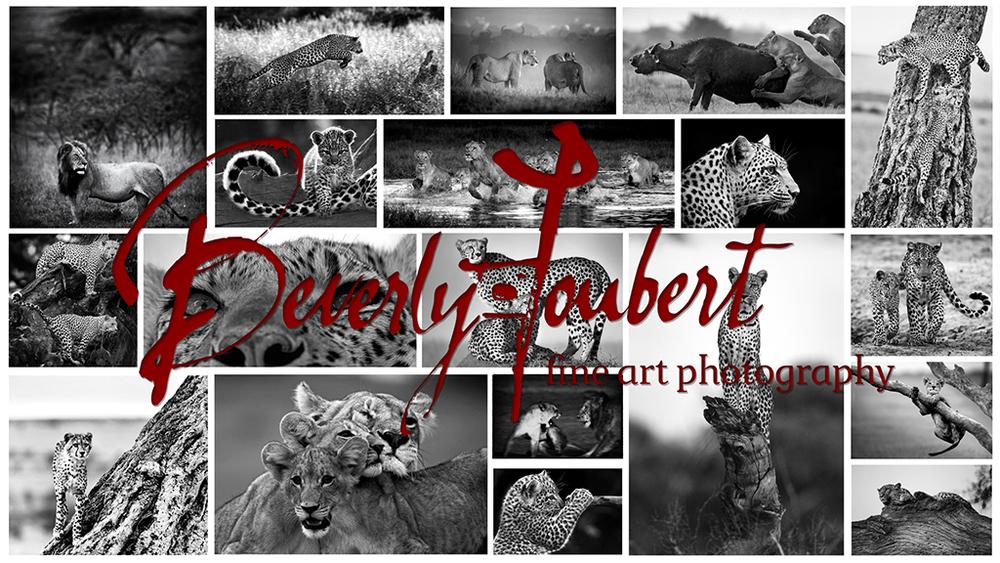 Big Cat Collage.jpg