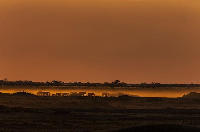 Elephants in the mist - visible against a backdrop that is highlighted by a slow-burning fire. #okavango #veldfire #elephants #landscape