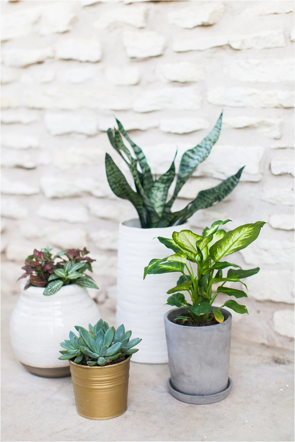 Porch Plant Suggestions | Feast & Dwell