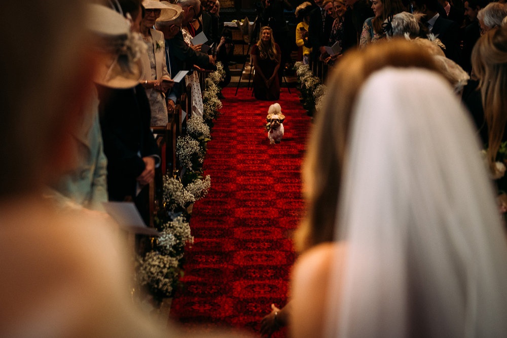 dog running down the aisle with the rings