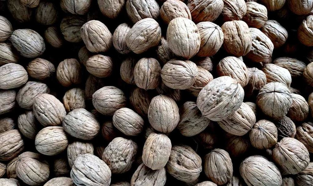 Bare-Biology-men_s-health-Tim-Blakey-nutrition-and-men_s-mental-health-why-a-happy-gut-means-a-happy-mind-walnuts_1024x1024.jpg