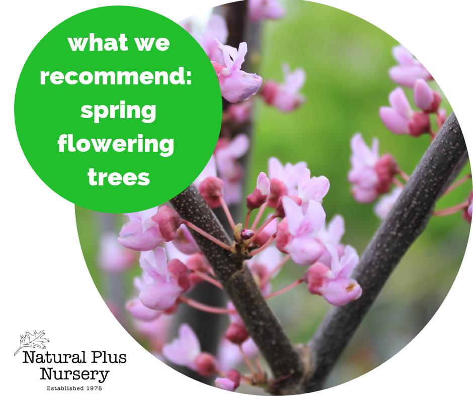 final spring flowering trees.png