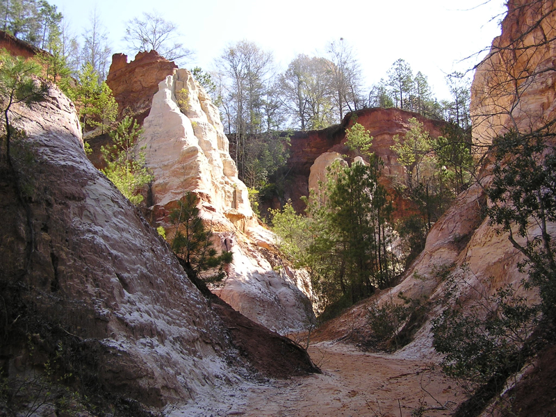 From the floor of Providence Canyon | Photo via Wikimedia Commons