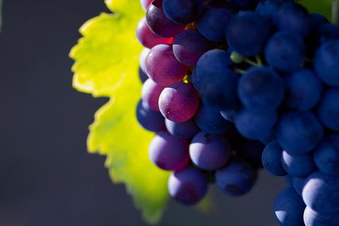dreamstime grapes_xs_228066.jpg