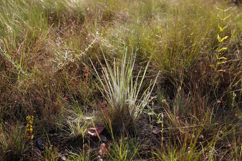 savannagrassland.jpg