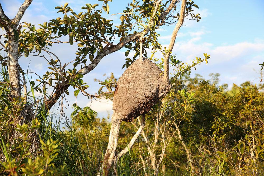 termitenest.jpg