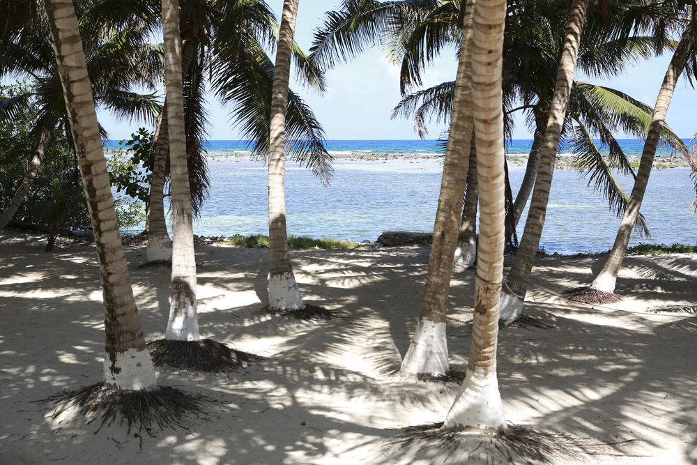 the Belize Barrier reef- right off the shore of tobacco caye