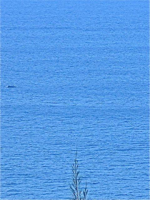 Trust me, it's a whale