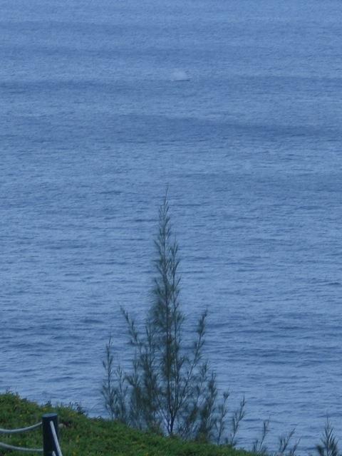 Whale Spouting!