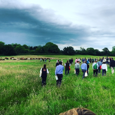Mob Grazing Demonstration with John Cherry and Tom Chapman